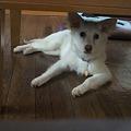 Photos: 机の下がお好き??