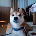 Photos: はんてん2