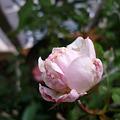 Photos: 2011.11 garden 082