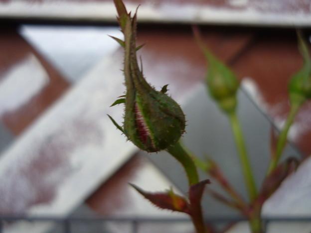 Photos: 2011.11 garden 084