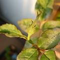 Photos: 2011.12 garden 006