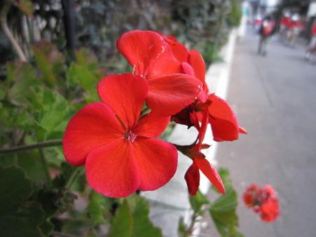 名の知らない花・2