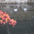 写真: 円通寺 - 15