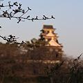 Photos: 岡山城と桜