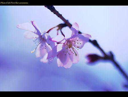 絆の花が咲く