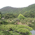 Photos: 110513-44栗林公園・芙蓉蜂から