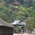 Photos: 110516-61厳島神社から見た多宝塔