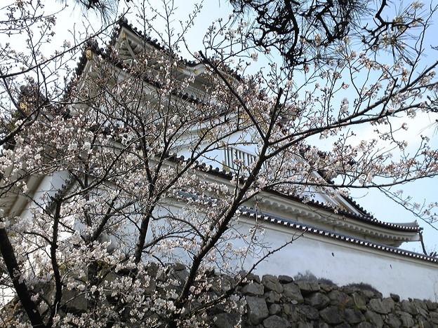 20120405_岸和田城_お城まつり33