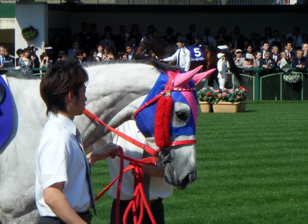 2010-05-02 天皇賞(春) メイショウベルーガ