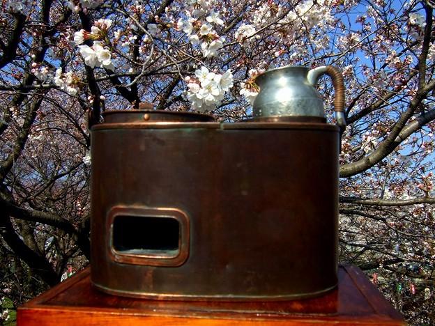 燗銅壺で花見 そろそろ燗酒も良い感じ