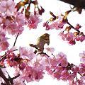 ~桜の中の・・・~