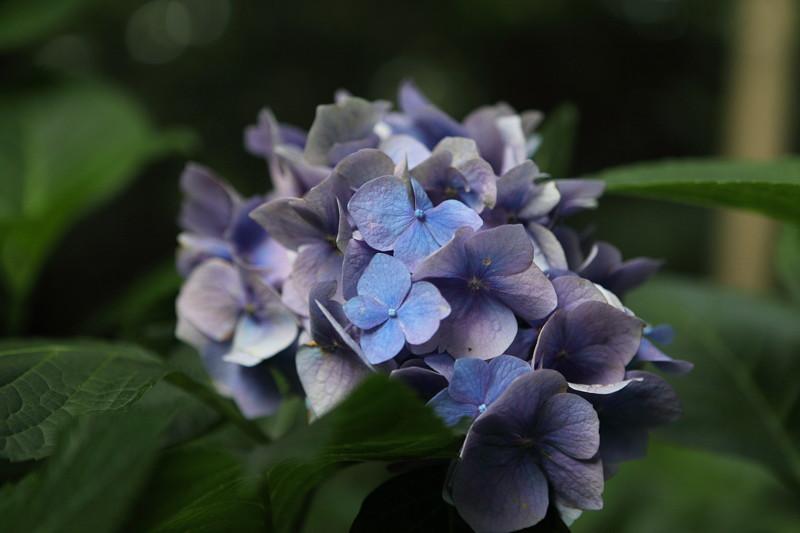 IMG_3165東京都庭園美術館にて