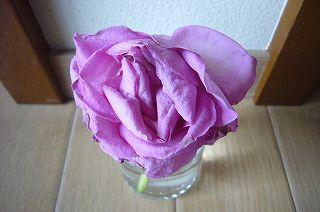 120323-1 枯れたバラ