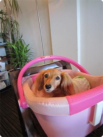 20110915 犬服教室(JURI)