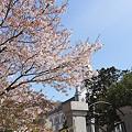 Photos: 散る桜06