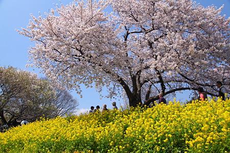 三川公園(6)