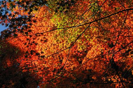 亀山公園の紅葉・1