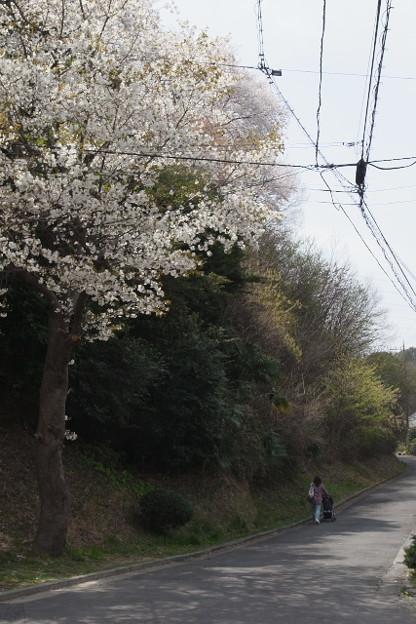写真: R0011019